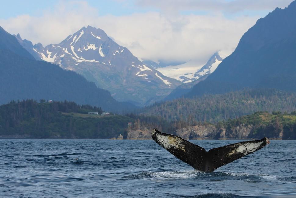 Image result for homer alaska kayaking